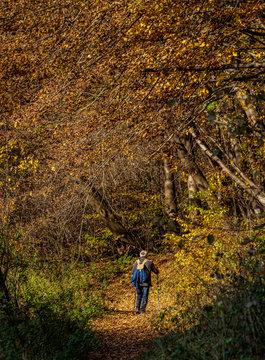 Autumn in Ojcow National Park, Krakow-Czestochowa Upland or Polish Jurassic Highland, Lesser Poland Voivodeship, Poland