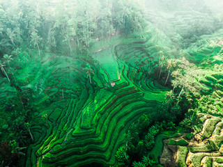 Garden Poster Rice fields Rice Terrace Bali, Indonesia. Aerial drone view. Tegalalang