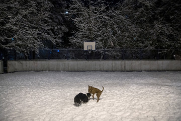 Dogs play on a sports ground on a snowy day in Moscow