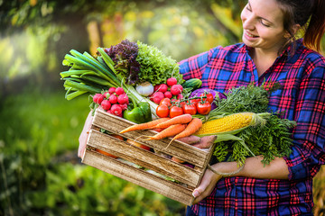 Farmer woman holding wooden box full of fresh raw vegetables. Basket with vegetable (cabbage, carrots, cucumbers, radish, corn, garlic and peppers) in the hands.