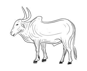 hand drawn indian bullock isolated vector