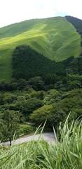 Papiers peints Olive view of a landscape
