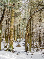 Icy hiking trail in Adirondack Mountains