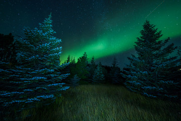 Wall Mural - Aurora Borealis (Northern Lights) above gras and trees