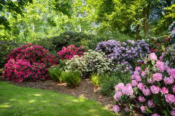 Foto op Plexiglas Tuin park with flowering rhododendrons in spring