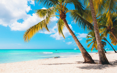 Poster Palmier Vacation summer holidays background wallpaper - sunny tropical exotic Caribbean paradise beach with white sand in Seychelles island Thailand style with palms and rocks