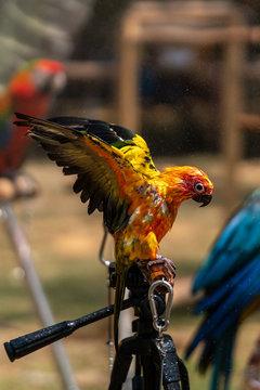 Close up image of Colorful Sun Parakeet