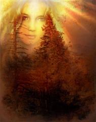 Foto auf Leinwand Braun mystical forest fairy guardian above a woodland landscape.