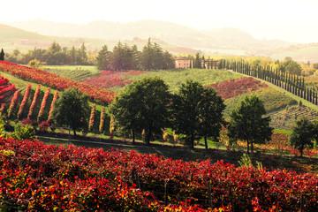 Poster Cappuccino Levizzano Rangone vineyards and countryside at sunset. Levizzano Rangone, Modena province, Emilia Romagna, Italy