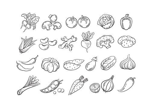 Sketch vegetable icon set vector illustration. Black line contour sketch vegetables, tomato and onion, potato and pepper doodle icon on white background for restaurant menu vintage design