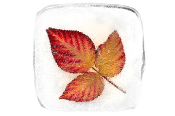 Autumn leaves inside the ice block