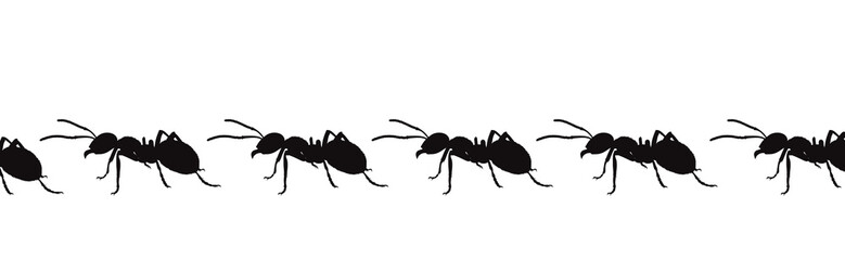 Vector silhouette of ant on white background. Symbol of insect walk line.