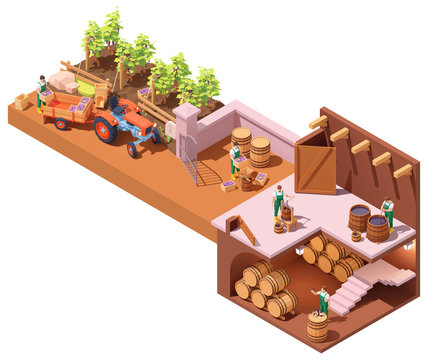 Vector isometric winery and wine making process. Wine makers on grapes harvesting on vineyard, crushing and pressing grapes, aging and bottling. Winery production process steps illustration