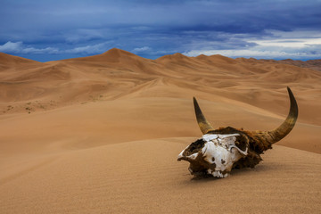 Bull skull in the sand desert and storm clouds. Death concept. Fototapete