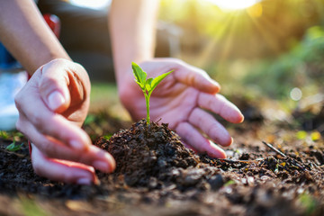 Closeup image of people holding and planting a small tree on pile of soil