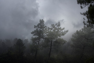 Cloudy and foggy woods at dusk