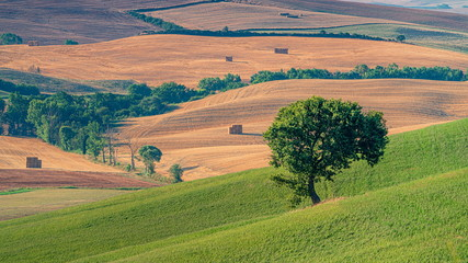 Aluminium Prints Salmon Beautiful landscape with green field, lonely tree and rolling hills. Travel destination Tuscany