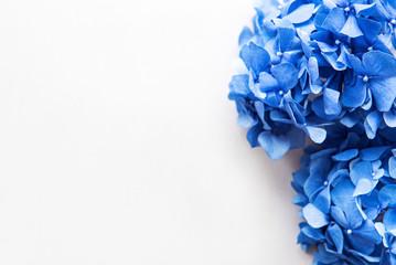 Spoed Fotobehang Hydrangea Blue hydrangea flowers