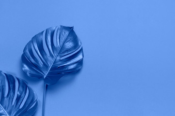 Fotomurales - Monstera leaves on blue background. Flat lay, top view, copy space. Summer background, nature. Creative minimal background with tropical leaves. Leaf pattern. Color of the year 2020 classic blue
