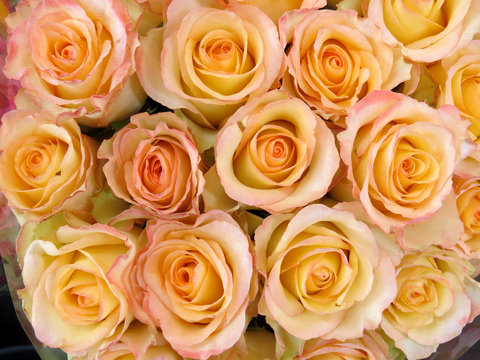 Pale pink roses floral texture