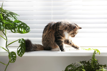 Adorable cat and houseplants on window sill at home