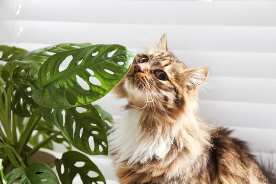 Adorable cat and houseplant near window at home