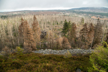Harz Forest