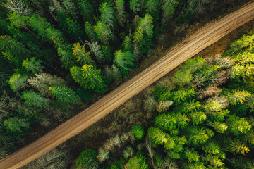 Rural forest road from above surrounded with green pine tree forest aerial view.