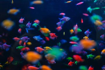 Colorful fish variety in aquarium, pet store