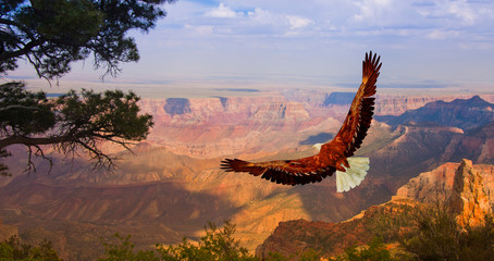 Fotorolgordijn Bleke violet Eagle over Grand Canyon USA