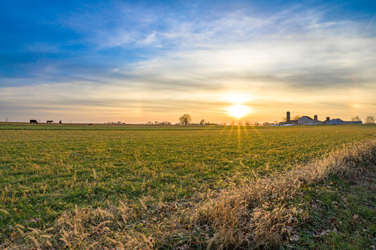 Calm, serene landscape, with young, green fields stretching toward the sunset beneath a flawless and beautiful blue sky, Lancaster County, Pennsylvania