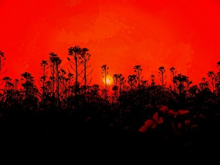 Foto auf Acrylglas Rot sunset in the field
