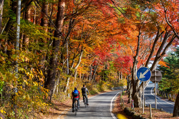 Two man riding a bicycle in colorful maple tunnel