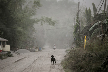 A stray dog barks on a road covered with ash from Taal Volcano in Agoncillo, Batangas City