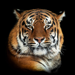 Wall Mural - Tiger on dark background