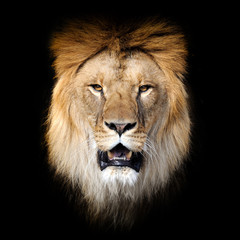 Lion on dark background