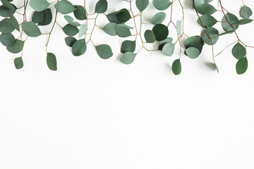 Eucalyptus leaves on white background. Border made of eucalyptus branches. Flat lay, top view, copy space