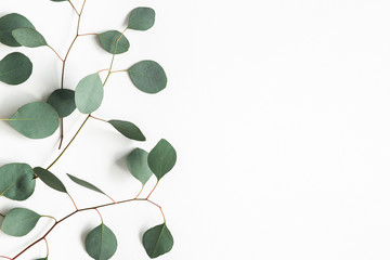 Photo sur Aluminium Montagne Eucalyptus leaves on white background. Frame made of eucalyptus branches. Flat lay, top view, copy space