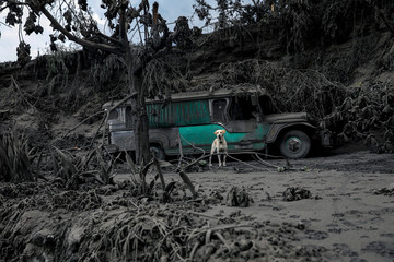 A dog left in a garage covered with ashes barks nearby the erupting Taal Volcano in Talisay