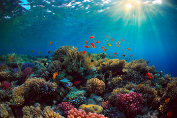Photo sur Toile Recifs coralliens coral reef with fish