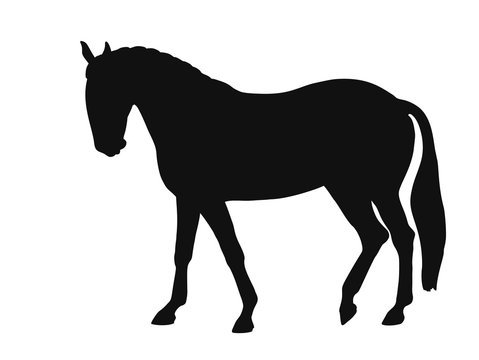 Silhouette of a horse breed lusitano side view