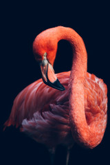 Tuinposter Flamingo Close-up of pink flamingo bird