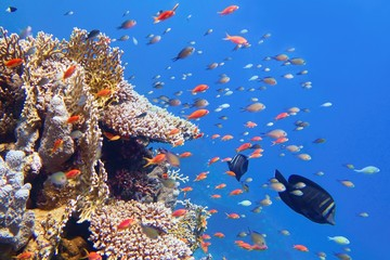 Beautiful tropical coral reef with shoal or coral fish