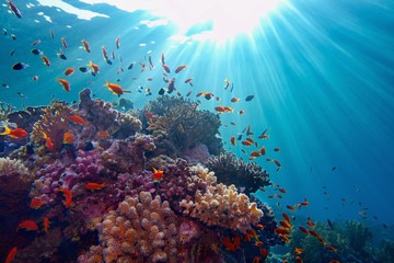 Photo sur Toile Recifs coralliens Life-giving sunlight underwater. Sun beams shinning underwater on the tropical coral reef.Ecosystem and environment conservation