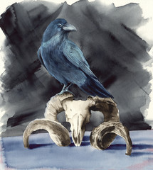 Watercolor picture of  a raven  sitting on a ram skull with on a black  background