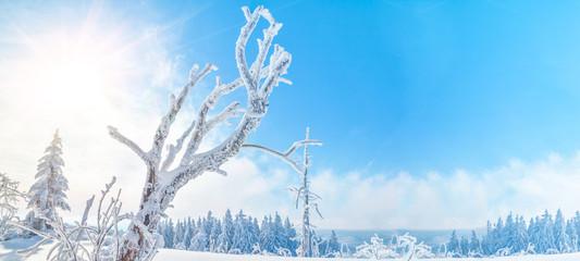 Foto auf Acrylglas Blau Stunning panorama of snowy landscape in winter in Black Forest - winter wonderland