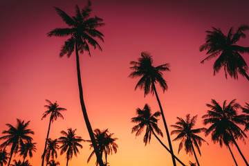 Fotobehang Koraal Tropical palm tree on sunset sky cloud abstract background.