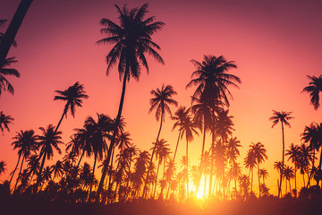 Photo sur Plexiglas Cote Tropical palm tree on sunset sky cloud abstract background.
