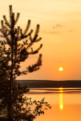 Romantic fairytale evening sunset on the shore of a freshwater lake. Spruce fir tree silhouette,...