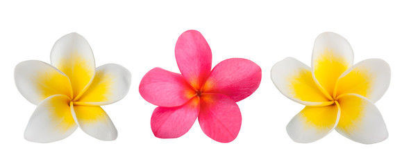 Spoed Fotobehang Frangipani Red and white Frangipani